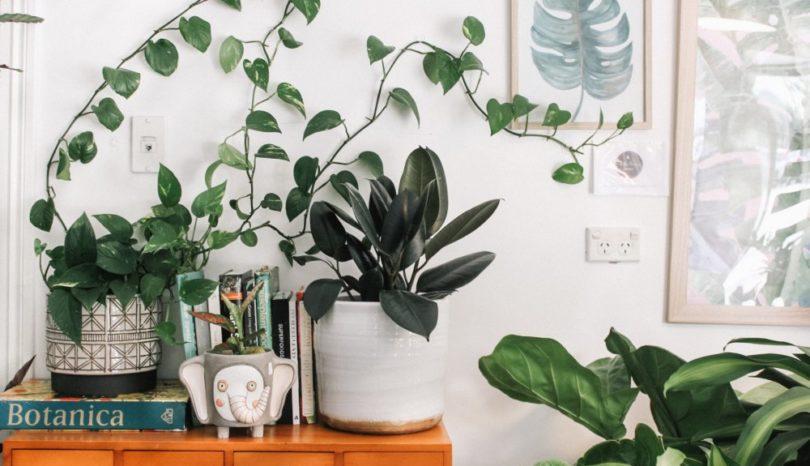 Ett nytt hem med plats för växtbelysning med ledlampor