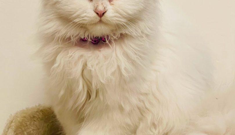Med rätt kattsand blir katten rumsren